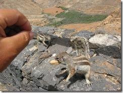 Adaptacion de las especies (1)