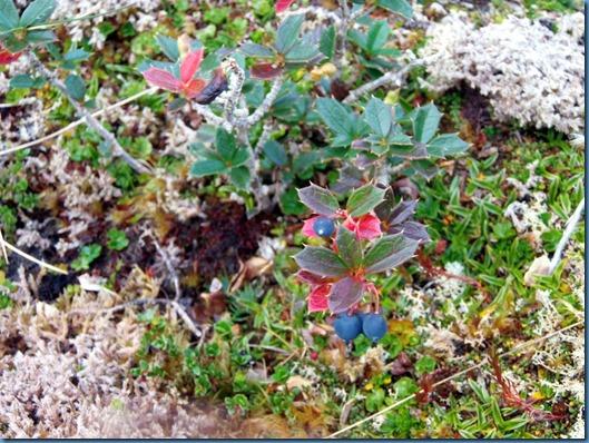 03 Flora local (1)