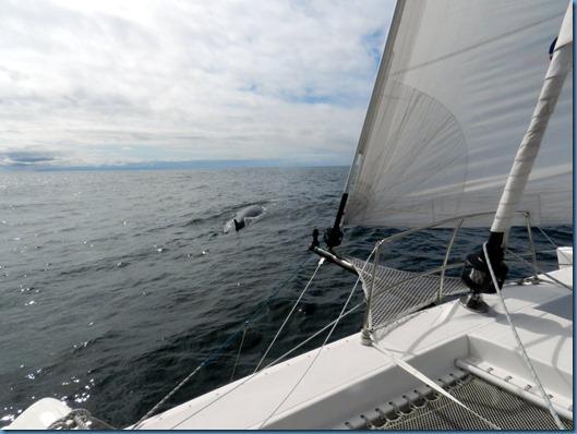 20150212 20'29 la ballena del Golfo de Penas