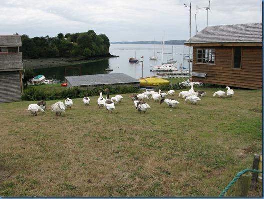 05 fauna local, marina y PRATI (2)