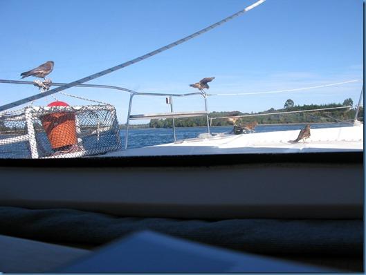 08 familia de chimangos a bordo (3)